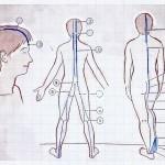 スーパーフィシャル・バック・ライン(SBL)の筋肉の起始停止部